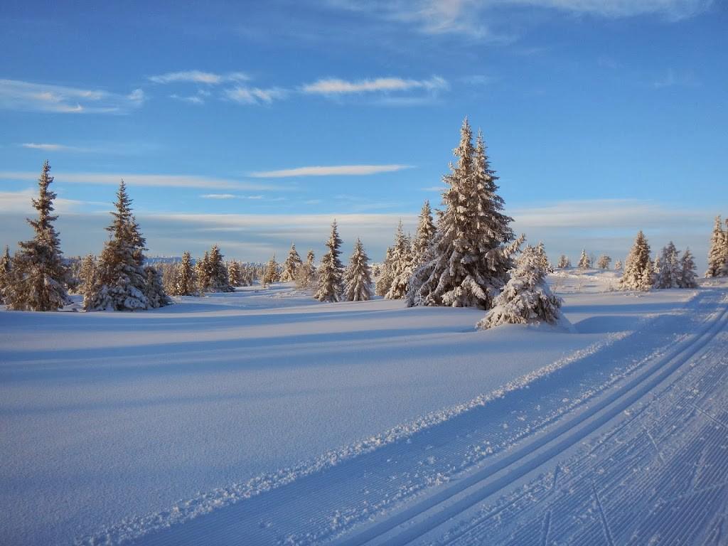 Skispor-2912131