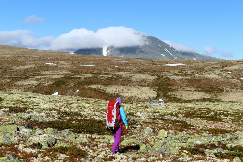 Sølnkletten i Alvdal Vestfjell
